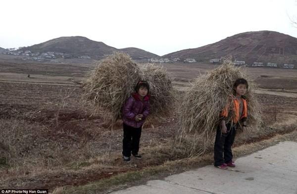 2 bé gái đang thu lượm rơm rạ tại tỉnh Hwanghae