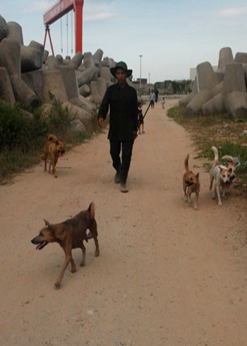 Chó nghiệp vụ được đưa hết làng biển Sơn Trà, Quảng Ngãi, chuẩn bị tham gia cuộc săn