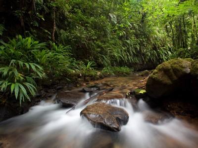 Rừng rậm Peru qua ống kính Salazar