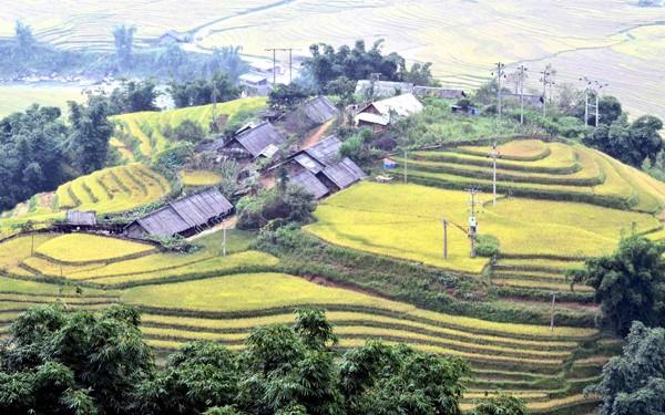Những ngôi nhà nhỏ của cư dân nơi đây được bao bọc bởi xung quanh là ruộng lúa