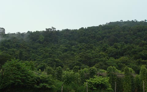 Rừng Bãi Thơm, nơi theo đồn đại có nhiều rắn hổ mây khổng lồ