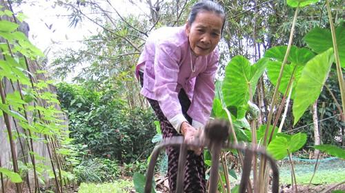 Tự trồng rau, đậu là công việc hằng ngày của cụ Trần Thị Cháu - Ảnh: Tuổi Trẻ