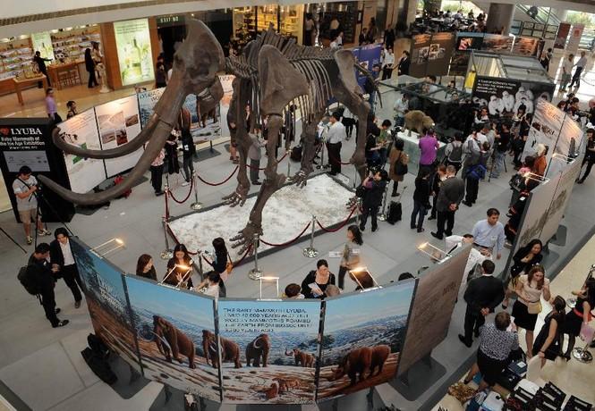 Xác voi ma mút con 10.000 năm tuổi - ảnh 3