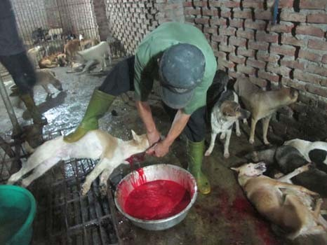 Cảnh giết chó ở Cao Hạ. Ảnh Văn Duẩn