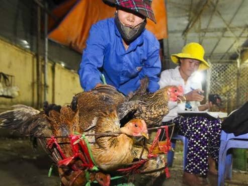 Gà Trung Quốc nhập lậu bán ở chợ Hà Vĩ (Thường Tín, Hà Nội)