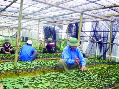 Vườn rau tại Làng thanh niên Ảnh: P.S