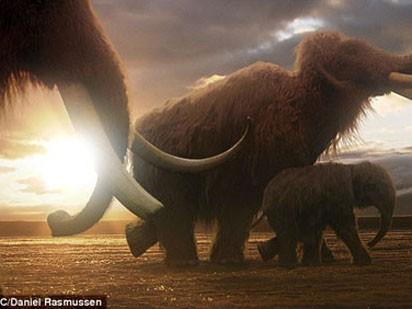 Ma mút Woolly từng sống ở vùng đảo Wrangel, Bắc Băng Dương 4.000 năm trước. Nghiên cứu di truyền cho thấy chúng có họ hàng gần với voi châu Á, vì vậy giới khoa học có kế hoạch tái sinh loài voi này bằng việc sử dụng nhân tế bào lưu trữ DNA của một con voi ma mút và trứng của loài voi châu Á. Ảnh: BBC