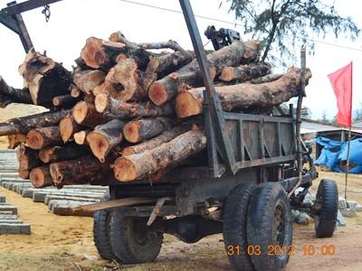 Xe chở gỗ bị người dân bắt giữ tại             bìa rừng Ảnh: V.H