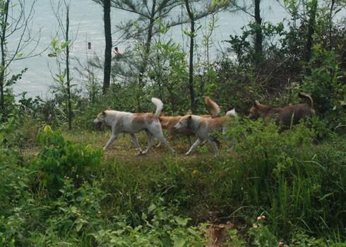 Chó nghiệp vụ được đưa vào chuyến đi săn thú