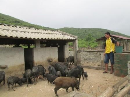Sau giờ lên lớp, thầy lại bộn bề với công việc trong trang trại tổng hợp của mình