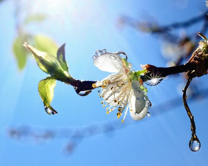 Vũ điệu của mùa xuân - ảnh 2