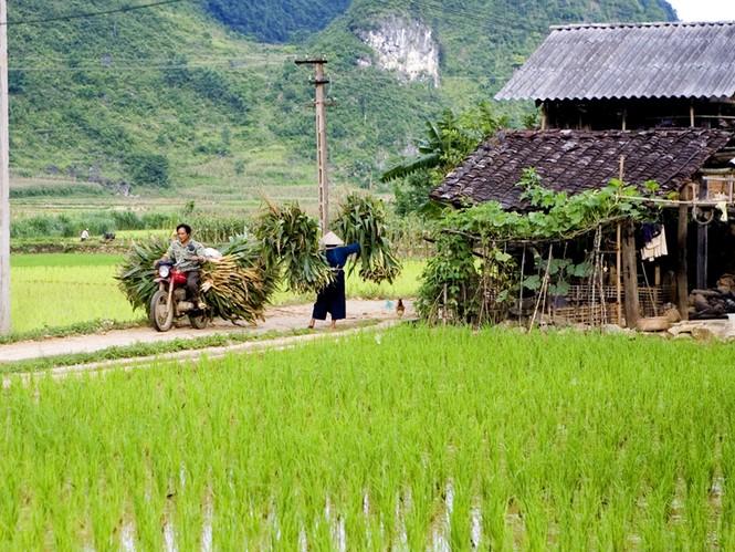 GS Võ nói, nếu không xóa bỏ thời hạn giao đất nông nghiệp, không thể kêu gọi đầu tư lớn từ người dân Ảnh: Hồng Vĩnh
