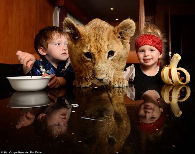 Em bé chơi cùng sư tử - ảnh 2