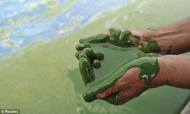 Trung Quốc khủng hoảng vì ô nhiễm môi trường - ảnh 3