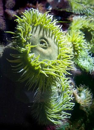 Hóa thạch được cho là loài cỏ chân ngỗng khổng lồ mọc dưới biển hàng trăm triệu năm trước đây