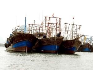 Tàu cá của ngư dân Việt Nam. Ảnh minh họa: Nguyễn Đán/TTXVN