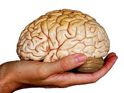Quá lạc quan là do não