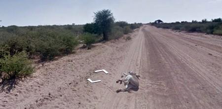Google cho biết xe hơi Street View của hãng không cán chết con lừa này