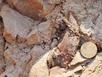 Hóa thạch mới được khai quật ở Trung Quốc