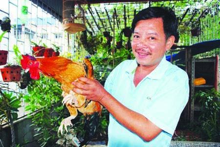 Diễn viên Quang Lâm với con gà trống bảy cựa mang về từ Xuân Sơn