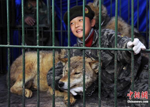 Cha nhốt con gái cùng chó sói để luyện lòng dũng cảm - ảnh 1