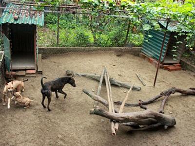 Chuồng nuôi chó Phú Quốc có nền cát, thả cành cây, thân gỗ vào để chó vận động. Ảnh: Hoàng Phương
