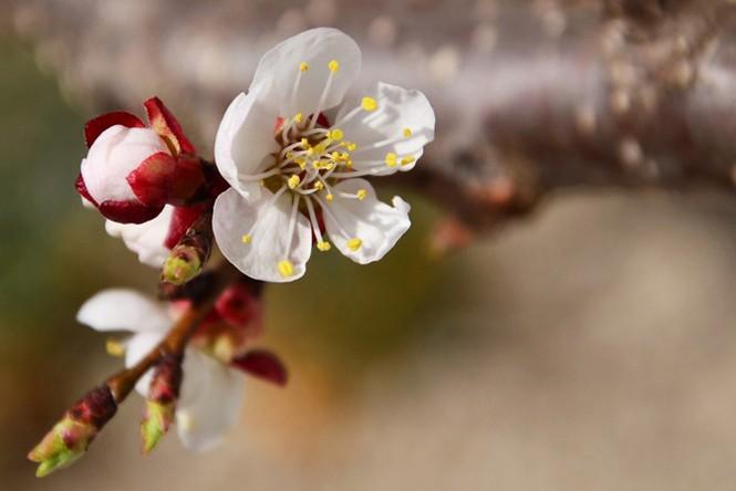 Vũ điệu của mùa xuân - ảnh 3