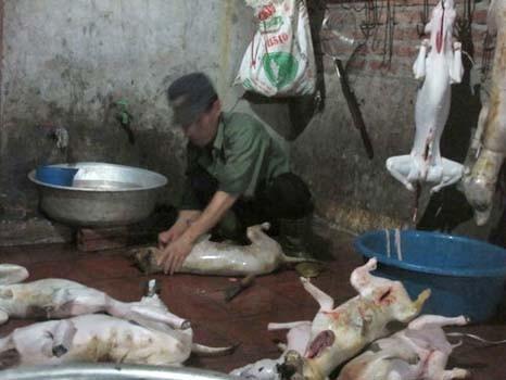 Mổ chó ở Cao Hạ. Ảnh Văn Duẩn