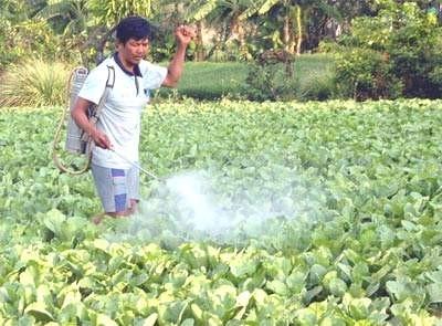 Phun thuốc trừ sâu không đúng quy tắc an toàn là nguyên nhân gây nhiễm độc