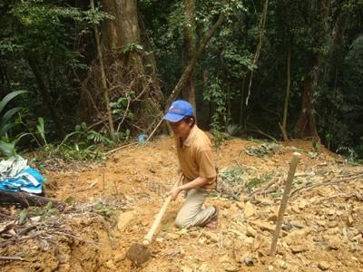 Bới tung cả cánh rừng để tìm theo dấu trầm