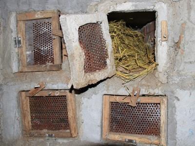 Bình thường rắn hổ chúa được nuôi ngoài trời. Khi trời lạnh thì được chuyển vào trong hộp làm bằng gỗ và có sưởi bằng điện