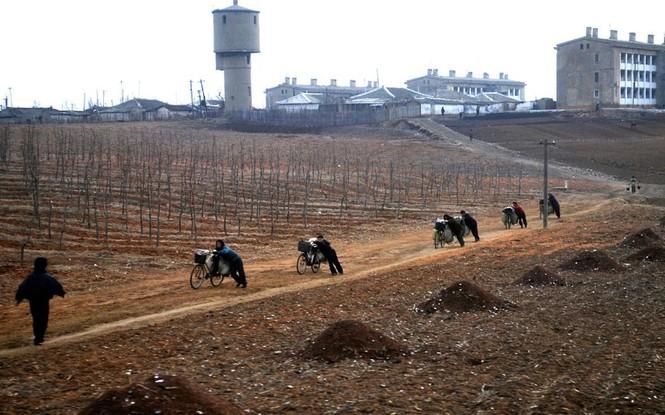 Phụ nữ Triều Tiên dùng xe đạp vận chuyển nguyên vật liệu cho nông dân cày cấy