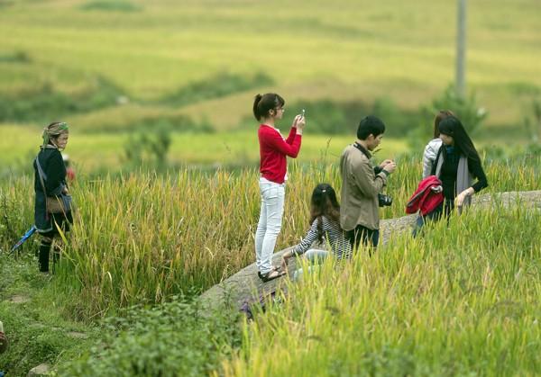 Trên mảnh đất vùng cao Mù Cang Chải, Yên Bái, vẻ đẹp của những thửa ruộng bậc thang uốn lượn uyển chuyển, tạo nên một kỳ quan làm say lòng khách phương xa.