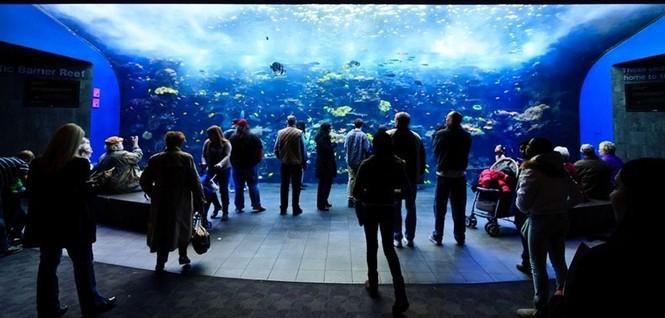 'Lạc' vào bể cá lớn nhất thế giới - ảnh 4