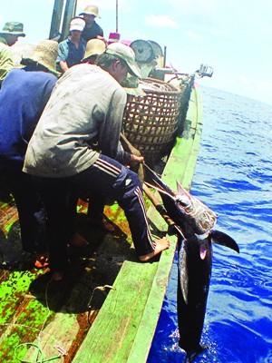 Với việc kích hoạt hệ thống quan sát tàu cá qua vệ tinh, ngư dân ra khơi sẽ yên tâm hơn. Ảnh: Hồng Vĩnh