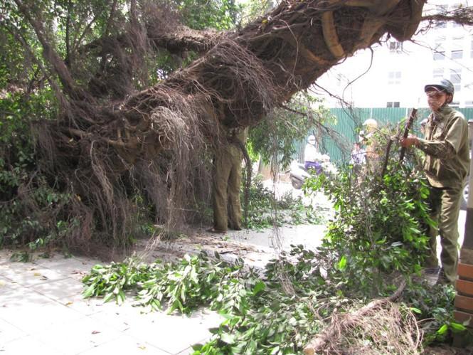 Lực lượng công ty công viên cây xanh Hà Nội thu dọn cây gãy đổ. Ảnh: Tuấn Nguyễn