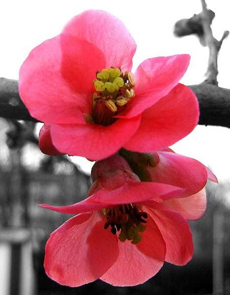 Vũ điệu của mùa xuân - ảnh 7