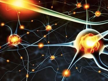 Tìm ra gene giúp trẻ hoá não - ảnh 1