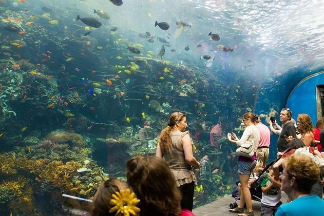 'Lạc' vào bể cá lớn nhất thế giới - ảnh 3