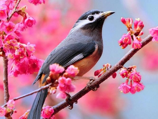 Vũ điệu của mùa xuân - ảnh 14