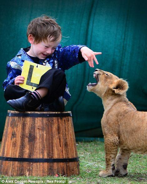 Em bé chơi cùng sư tử - ảnh 4