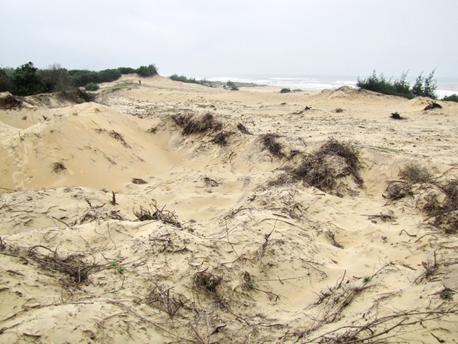 Bờ cát, rừng cây ven vịnh biển Lăng Cô bị lật tung, cày xới để làm đất san lấp trái phép. Ảnh: Ngọc Văn