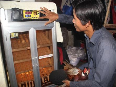 Anh Thiệp đầu tư máy ấp trứng cho hiệu quả cao. Ảnh: Hoàng Sơn