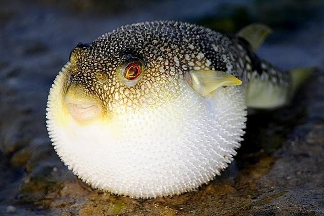Đi biển, tránh xa những loại hải sản 'sát thủ' này - ảnh 1
