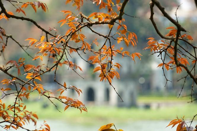 Hà Nội rực rỡ nắng vàng trong tiết trời cuối xuân - ảnh 1