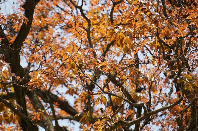Hà Nội rực rỡ nắng vàng trong tiết trời cuối xuân - ảnh 2