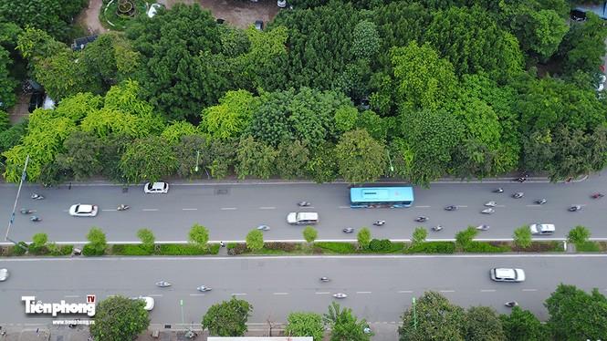 Hàng cây trên đường Kim Mã trước giờ chặt hạ, đánh chuyển - ảnh 2