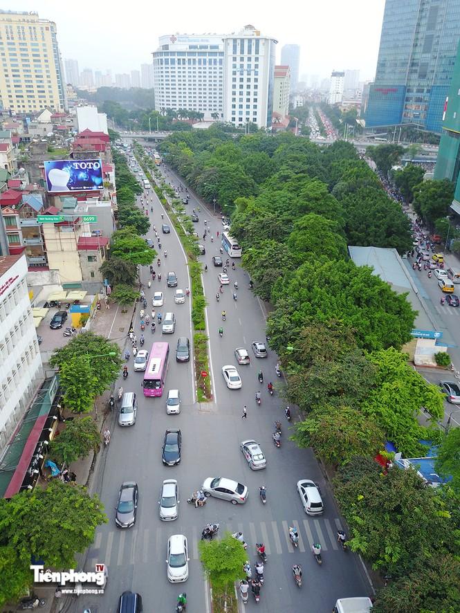 Hàng cây trên đường Kim Mã trước giờ chặt hạ, đánh chuyển - ảnh 3