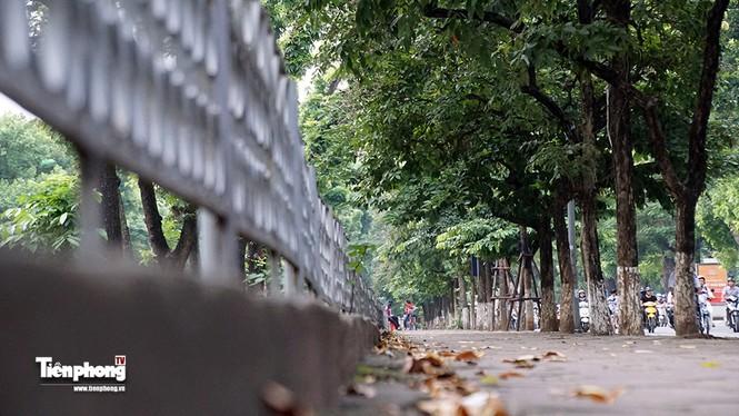 Hàng cây trên đường Kim Mã trước giờ chặt hạ, đánh chuyển - ảnh 4