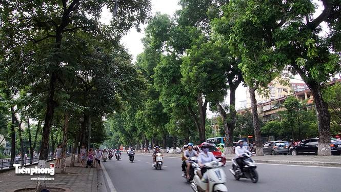 Hàng cây trên đường Kim Mã trước giờ chặt hạ, đánh chuyển - ảnh 6